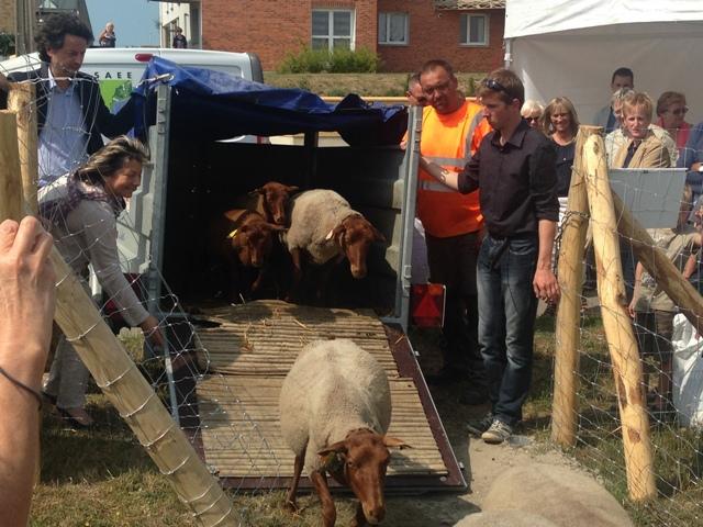 Installation des moutons