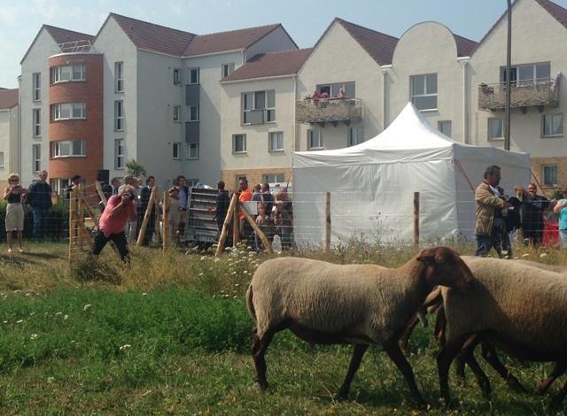 Moutons installés