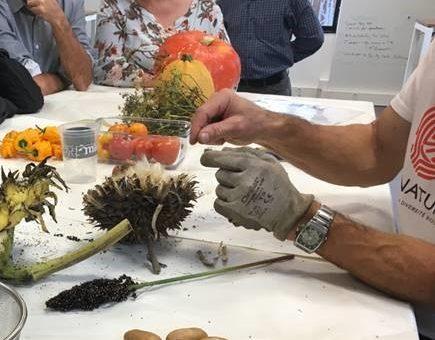 Comment faire ses graines ?